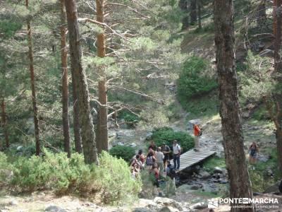 Valle del Lozoya - Camino de la Angostura;senderos club taxus bacata excursiones cerca madrid